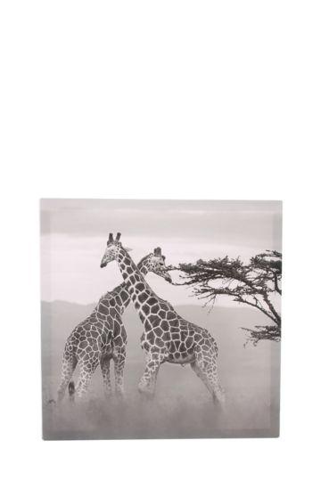 Giraffes 40x40cm Wall Art