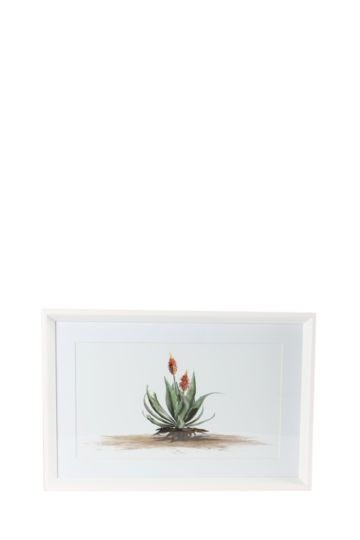 Framed Aloe 60x40cm Wall Art