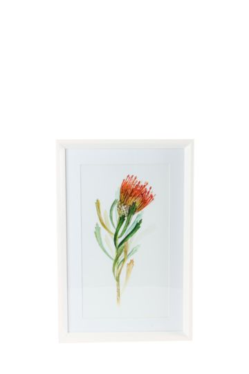 Framed Protea 60x40cm Wall Art
