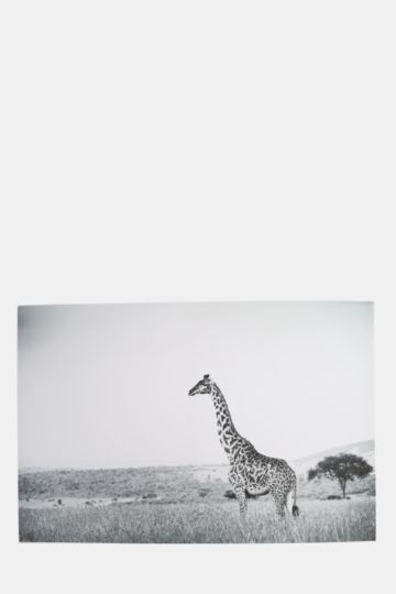 Giraffes 90x60cm Wall Canvas