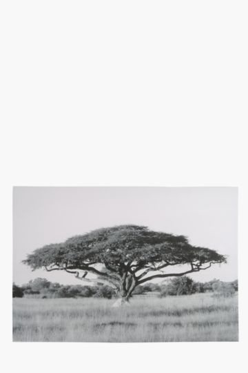 Acacia Tree 90x60cm Wall Canvas
