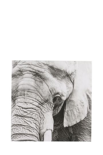 Close Up Elephant 40x40cm Wall Art