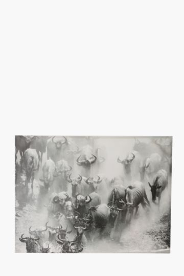 Charging Buffalos 120x90cm Wall Canvas