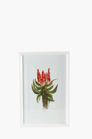 Framed Aloe 40x60cm Wall Art