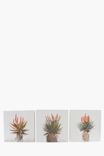 3 Aloe 40x40cm Wall Art