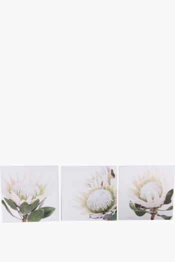 3 Printed Protea 40x40cm Wall Art
