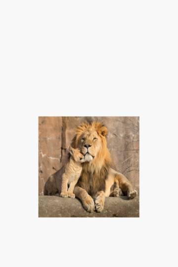 Printed Lion Family 40x40cm Wall Art