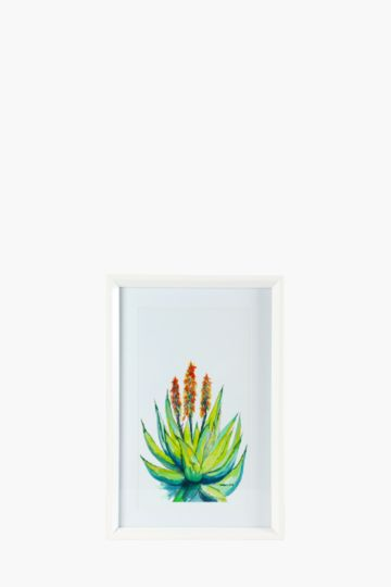 Framed aloe 60x40cm wall art