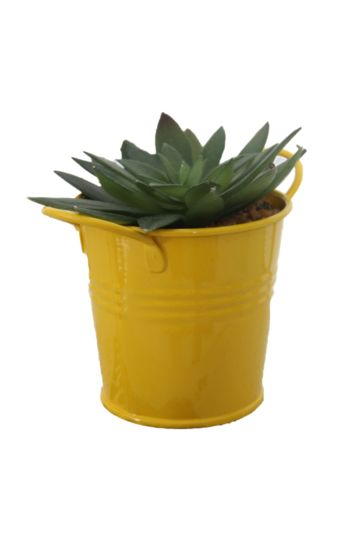Flowers Potted Plants Accessories